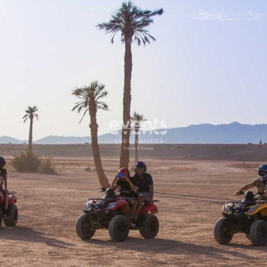 Combiné dromadaires et Quads dans la palmeraie de Marrakech