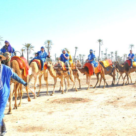 Découverte de la palmeraie de Marrakech à dos de dromadaires